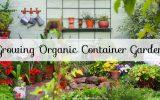 Organic Container Garden